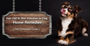 Hair fall & Skin infection in dogs